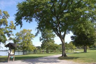 The Common in summer